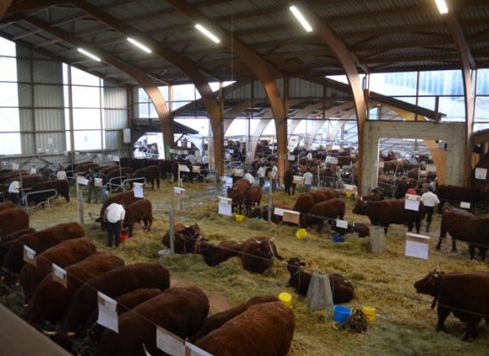 concours national salers 2012