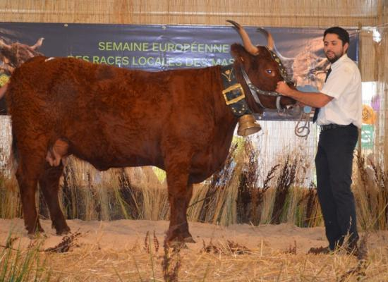 1er prix vaches laitieres 3-4 ans - IRMA - GAEC RONGIER